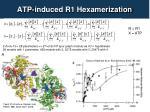 atp induced r1 hexamerization