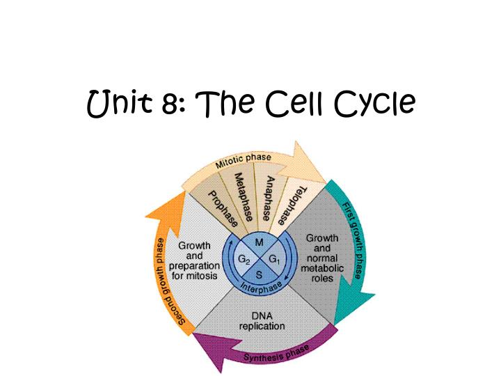 unit 8 the cell cycle n.