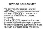 why do cells divide2