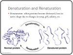 denaturation and r enaturation