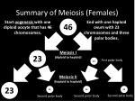 summary of meiosis females
