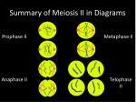 summary of meiosis ii in diagrams