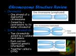 chromosome structure review