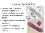 1 asexual reproduction