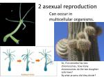 2 asexual reproduction