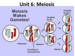 unit 6 meiosis