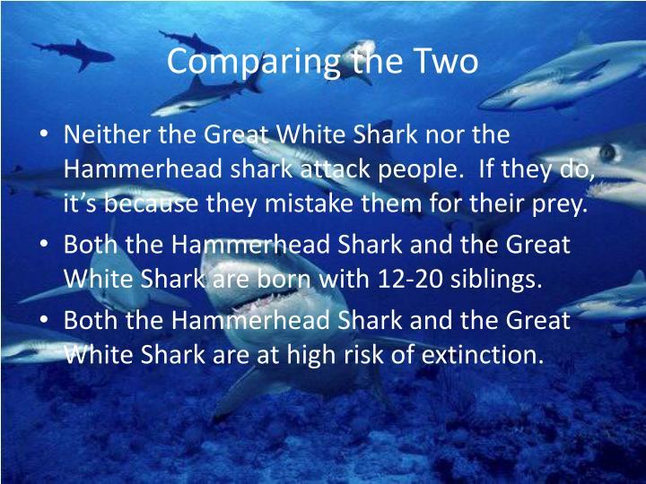 ppt - great white shark vs. hammerhead shark powerpoint, Modern powerpoint