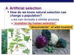 4 artificial selection