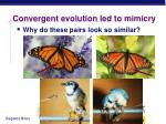 convergent evolution led to mimicry