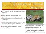 examples of natural selection