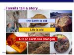 fossils tell a story