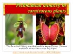 peckhamian mimicry in carnivorous plants