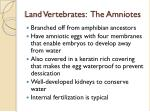 land vertebrates the amniotes