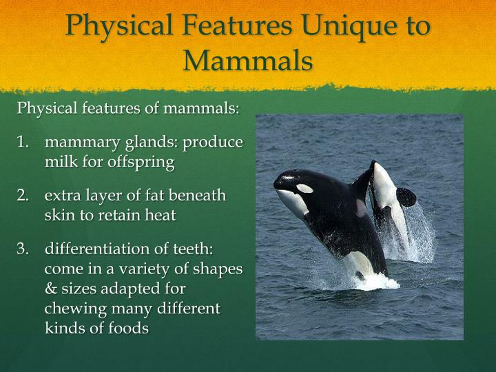 Physical Features Unique to Mammals