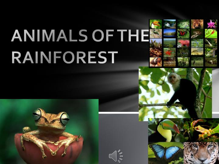animals of the rainforest n.