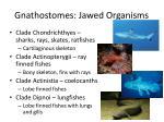 gnathostomes jawed organisms