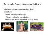 tetrapods gnathostomes with limbs