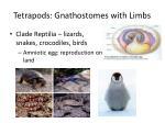tetrapods gnathostomes with limbs1