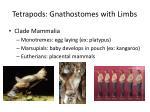 tetrapods gnathostomes with limbs2
