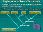 phylogenetic tree tetrapods