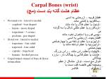 carpal bones wrist1