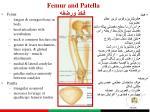 femur and patella