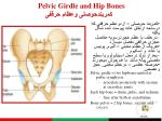 pelvic girdle and hip bones