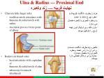 ulna radius proximal end