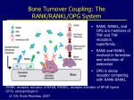 bone turnover coupling the rank rankl opg system
