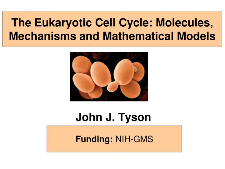 the eukaryotic cell cycle molecules mechanisms and mathematical models n.