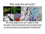 why study the cell cycle