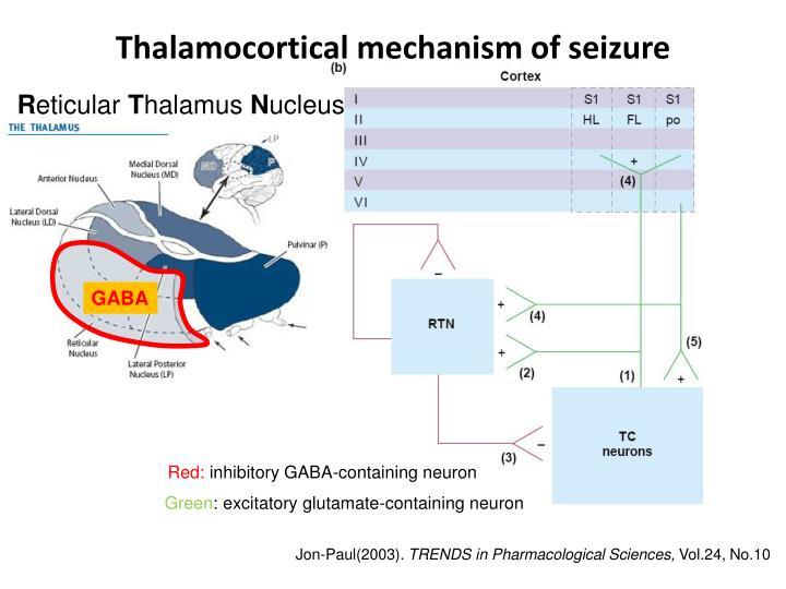 Thalamocortical mechanism of seizure