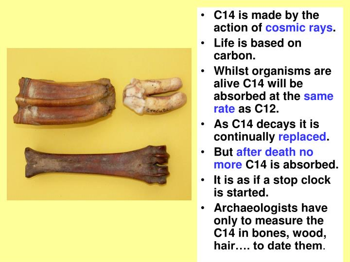C14 is made by the action of