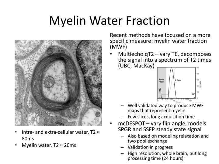 Myelin Water Fraction