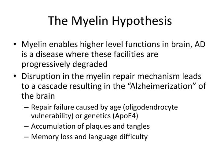 The Myelin Hypothesis