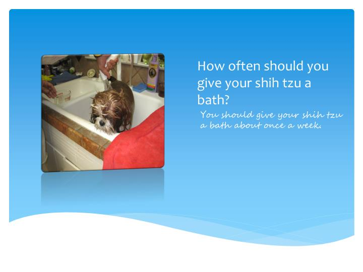 How often should you give your shih