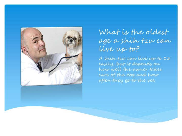What is the oldest age a shih