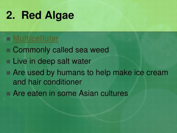 2.  Red Algae