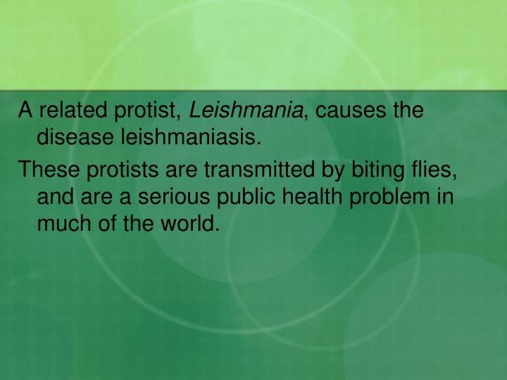 A related protist,