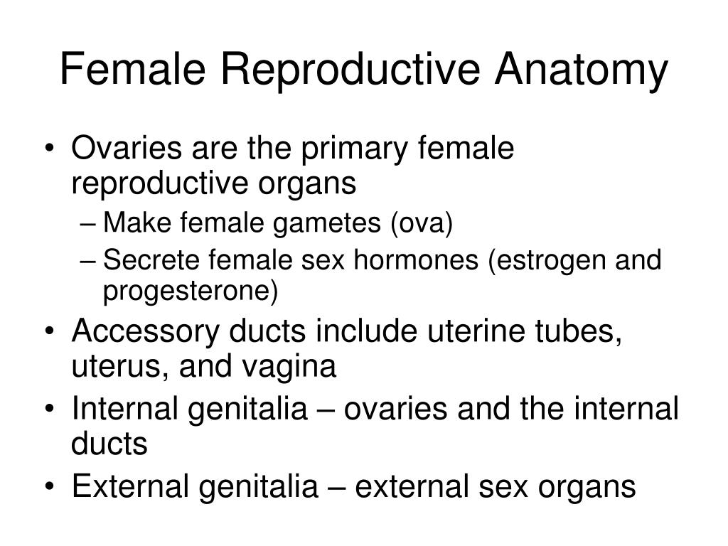 Ppt Female Reproductive Anatomy Powerpoint Presentation Id2130803