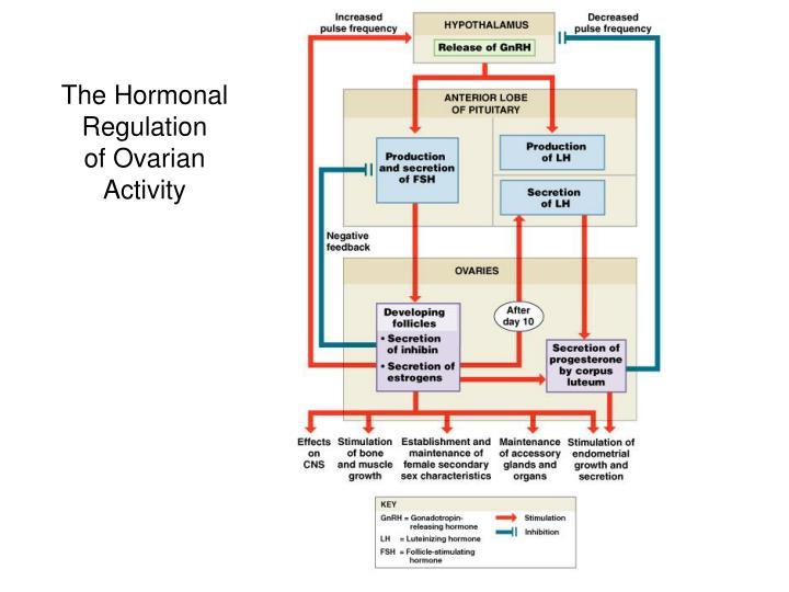 The Hormonal Regulation
