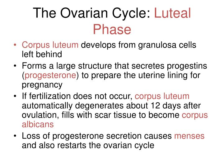 The Ovarian Cycle: