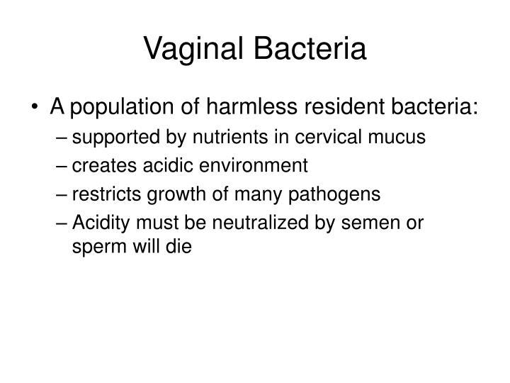Vaginal Bacteria