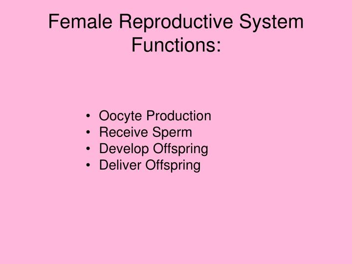 Ppt Female Reproductive System Functions Powerpoint Presentation