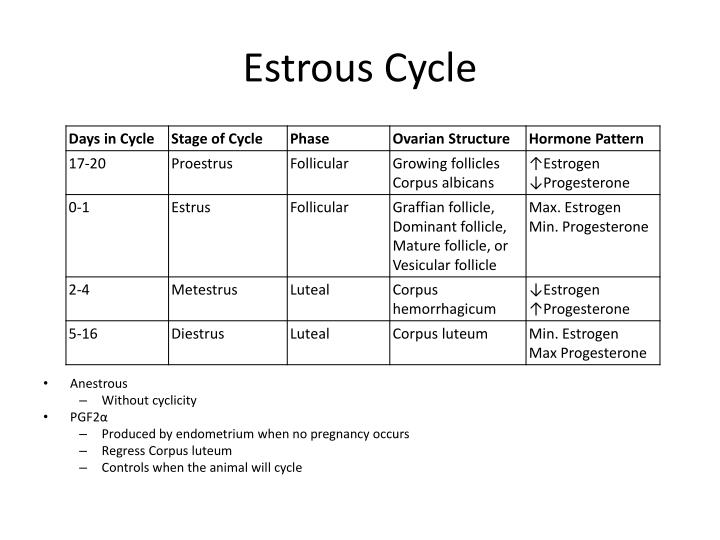 Estrous Cycle