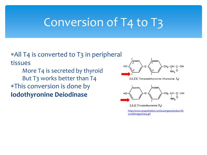 Conversion of T4 to T3