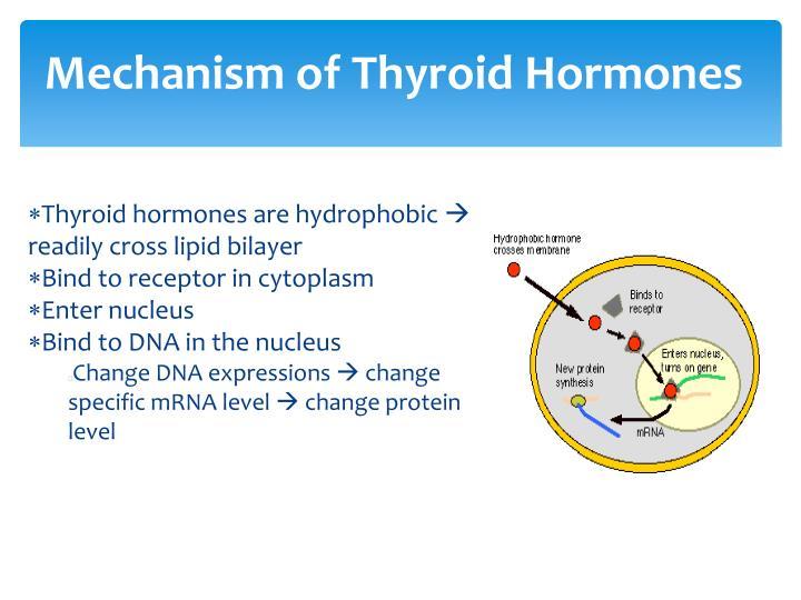 Mechanism of Thyroid Hormones