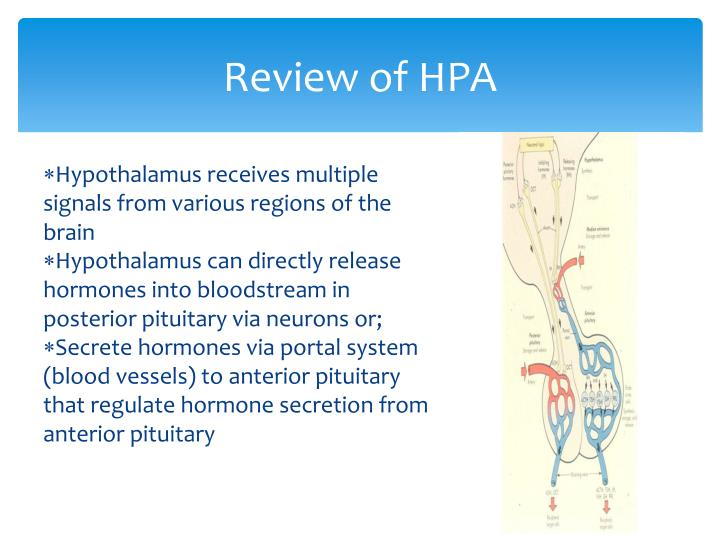 Review of HPA