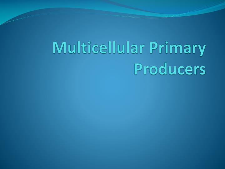 multicellular primary producers n.