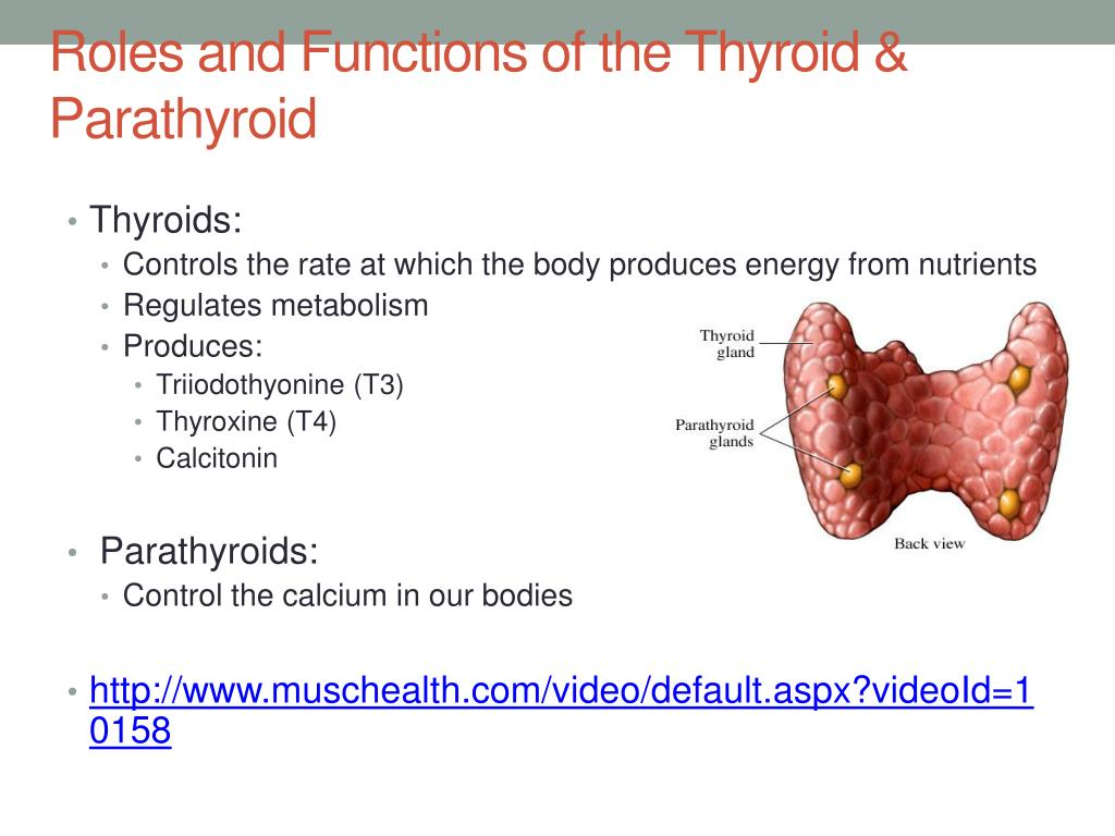 Ppt Thyroid Parathyroid Powerpoint Presentation Free Download Id 2133395
